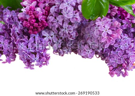 Bunch  of lilac flowers border isolated on white background - stock photo