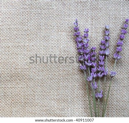 Bunch of lilac lavender flowers on sackcloth background - stock photo