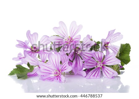 Bunch of mallow or malva flowers isolated on a white background - stock photo