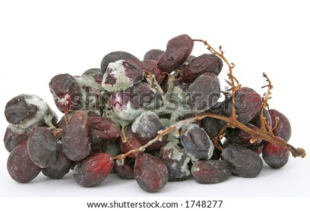Bunch of moldy red grapes isolated on white, copy space, macro, close up - stock photo
