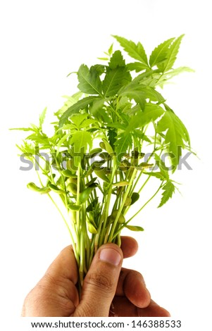 Bunch of neem plants - stock photo