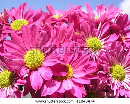 bunch of pink flowers against blue sky - stock photo