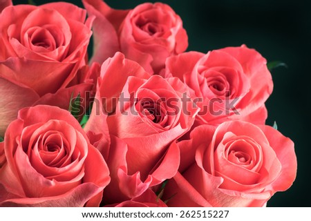 Bunch of pink rose flowers close-up on black background. Shallow DOF. - stock photo