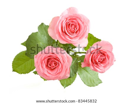 Bunch of pink roses  isolated on white - stock photo