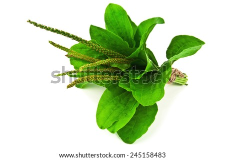 bunch of plantain on white background - stock photo