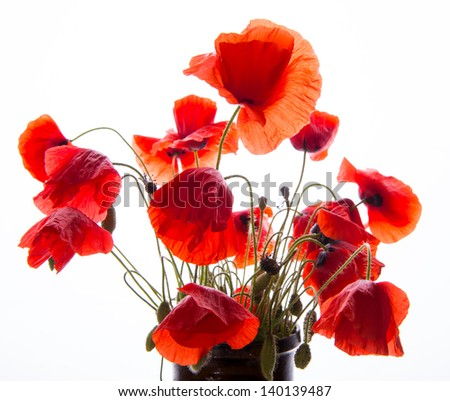 Bunch of poppies in vase on a white background. - stock photo