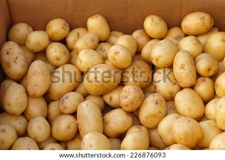 Bunch of raw yellow potatoes in the box - stock photo