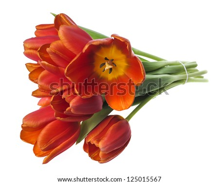 bunch of red tulips on white background - stock photo