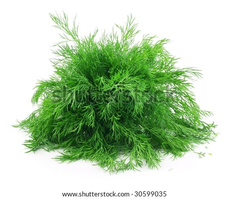 Bunch of Ripe Dill Isolated on White Background - stock photo
