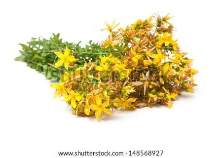 Bunch of St. John's wort on a white background - stock photo