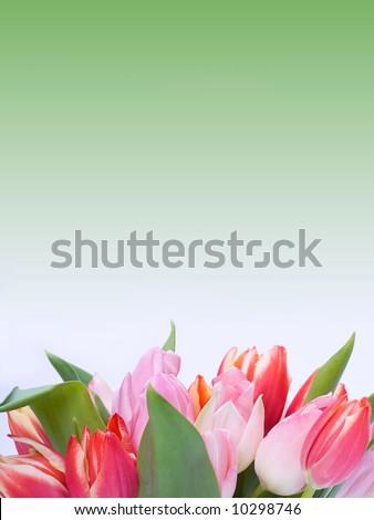 Bunch of tulips - stock photo