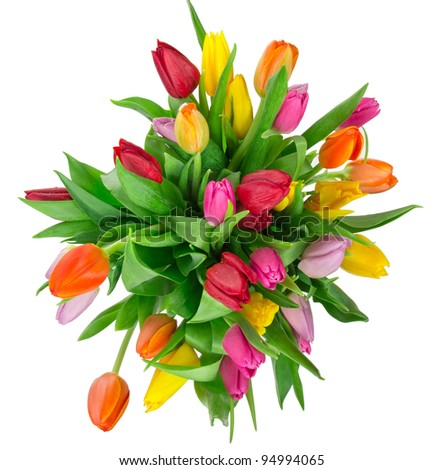 Bunch of tulips isolated on white background - stock photo