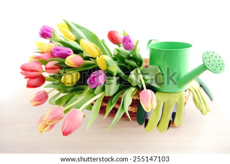 Bunch of Tulips on a basket with gardening tools like water can and gardening gloves - stock photo