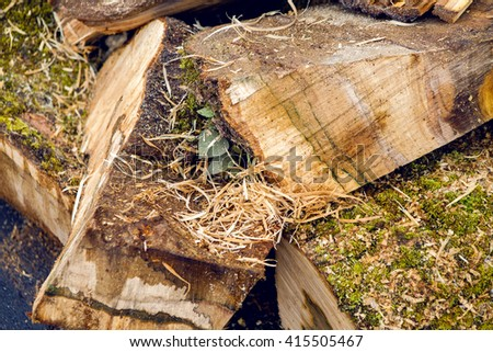 bunch of wet firewood with moss lying in the street - stock photo