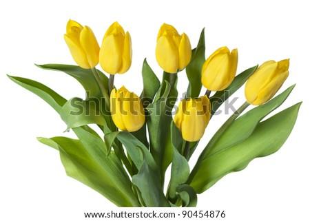 Bunch of yellow tulips. - stock photo
