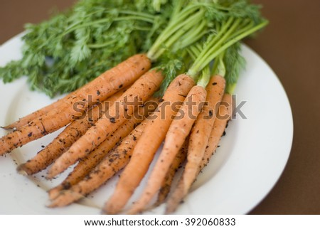 Bunch of young freshly harvested carrots from the garden still with their leaves and attached soil particles lying on white plate - stock photo