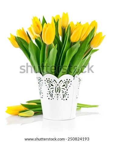 Bunch yellow spring tulips in bucket. Isolated on white background - stock photo
