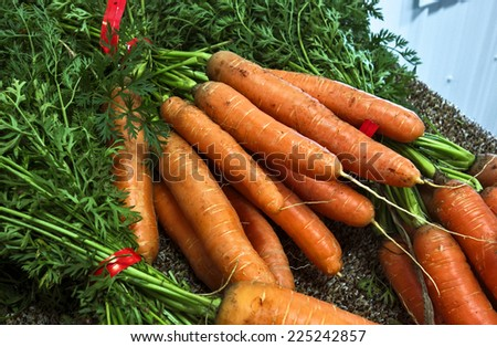 Bunches of fresh carrots at a farmer's market. - stock photo