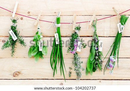Bunches of fresh herbs with name labels hanging on a line from wooden clothes pegs in a herb gardening concept - stock photo