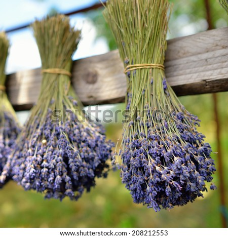 Bunches of lavender flowers on a wooden fence outdoor. Provence, France  - stock photo