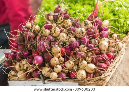 Bunches of radish lying on grocery table - stock photo