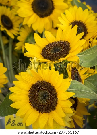 Bunches of sunflowers for sale at market. - stock photo