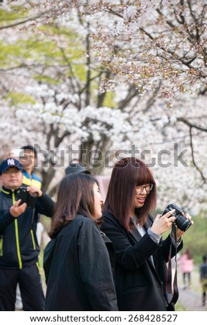 BUNDANG DISTRICT, SOUTH KOREA, 11 APR 2015: Crowds take photos and enjoy cherry blossoms in full bloom in Central Park in Bundang District of Seongnam, located just outside of Seoul. - stock photo