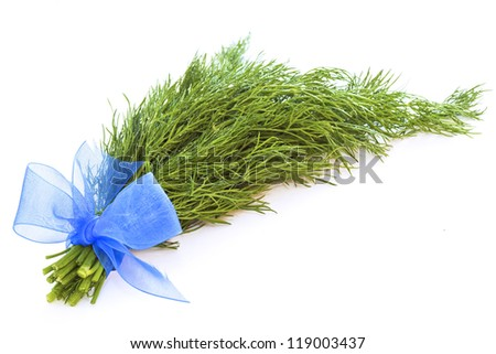 Bundle of fresh green dill with blue ribbon isolated on white background - stock photo