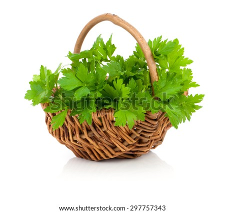 Bundle of fresh parsley in a wicker basket, on a white background - stock photo