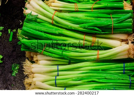 Bundle of green onions in a supermarket at Colfax, Whitman County, Washington, USA. Close up and full frame view of green onions. Color full and healthy concept. - stock photo