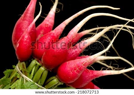 bundle of red radish - stock photo