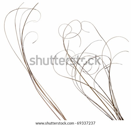 bundles of thin ornamental curly sticks. Very high-res. Clean edges, no shadows. - stock photo