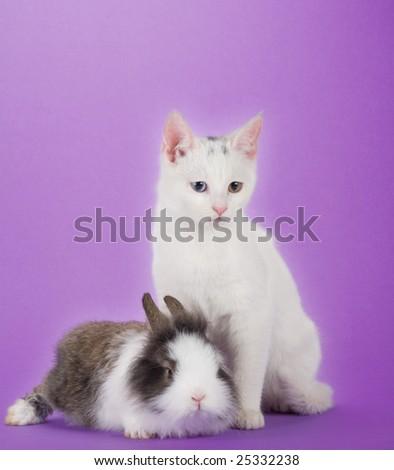 bunny and kitten, isolated on purple background - stock photo