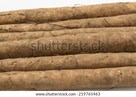 Burdock - stock photo