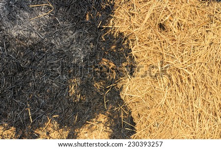 Burn forest ground - stock photo