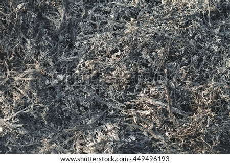 Burned ashes. Shallow focus.  - stock photo