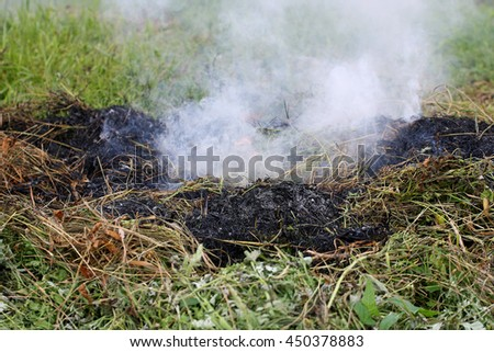 Burned dry grass closeup. A charred piece of grass on a background of fresh green shoots. - stock photo