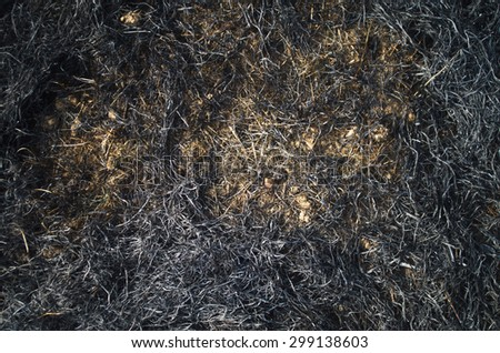 Burned straws and grass on a field - stock photo