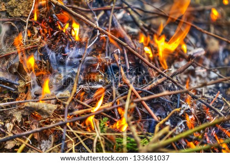 Burning fire in forest - stock photo