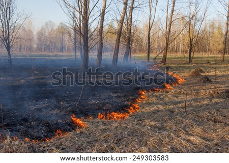 Burning grass in the spring dry forest - stock photo