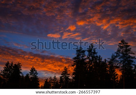 burning sky at sunset over the dark forest - stock photo