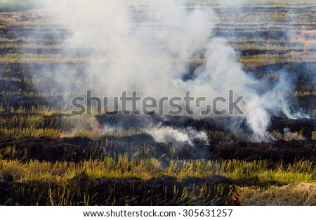 Burning straw stubble farmers may smoke pollution, which is a dangerous global warming. - stock photo