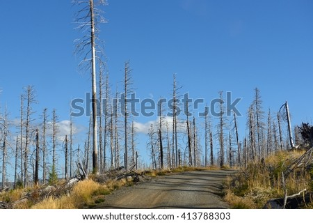 Burnt forest after a large fire and the moon at the sky between the trees. Mount Hood Cooper Spur, Oregon, USA Pacific Northwest. - stock photo