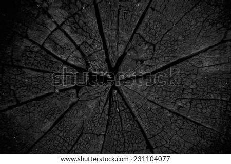 burnt weathered cracked stump with vignette - stock photo