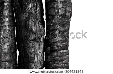 Burnt wood isolated on white background - stock photo