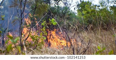 Bush fire in Kakadu National Park, Australia. - stock photo