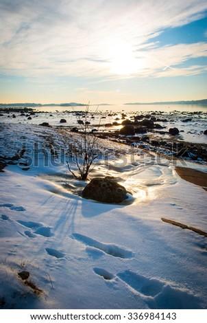 Bush in frozen fjord sunshine, Norway - stock photo