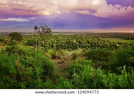 Bush in Tanzania, Africa. Sunset landscape - stock photo