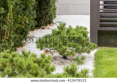 bush in the garden - stock photo