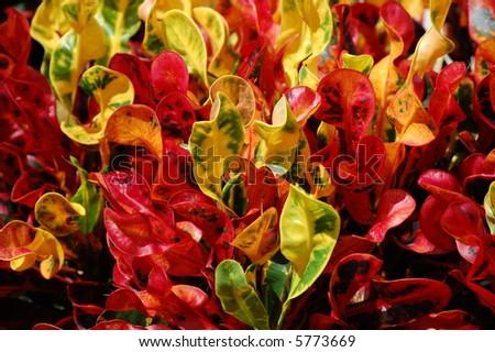 Bush of Color - stock photo